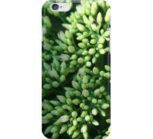 buds and a bee iPhone Case/Skin