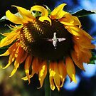 Hummingbird and Sunflower by SANDRA BROWN