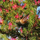 A hummingbird by SANDRA BROWN