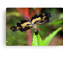 """""""Close to a dragon fly"""" Canvas Print"""