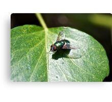 A Green Fly (macro) Canvas Print