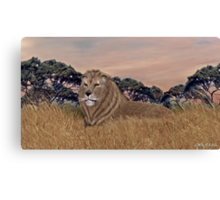 African Male Lion Canvas Print