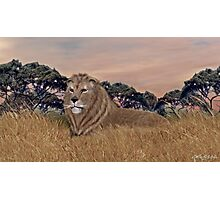 African Male Lion Photographic Print