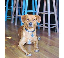 Dog In A Bar Photographic Print