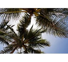 Blue sky sun and palms Photographic Print