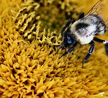 Busy Bumble by Keala