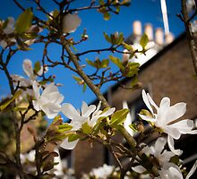 Spring first shoots by Gabrel