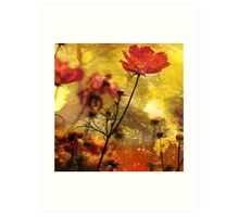 Cosmea  (Abstract Red) Art Print
