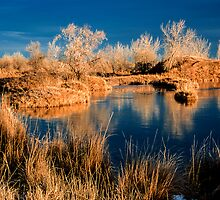 Golden Sawhill Ponds Morning by Gregory J Summers