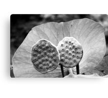 Twin Pods - Black and White Canvas Print
