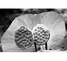 Twin Pods - Black and White Photographic Print