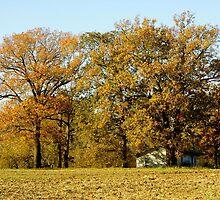 Autumn Farm by WildestArt