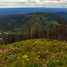 Hilltop View by Sheryl Gerhard