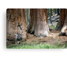 Yosemite Giants Canvas Print