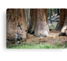 Yosemite Giants Canvas Print