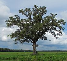 Single Tree In The Wide Open Fields by Cynthia48
