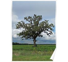 Single Tree In The Wide Open Fields Poster