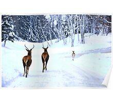 Joy to the World - Omega Wildlife Poster