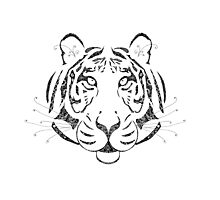 Tiger ~ Full Photographic Print