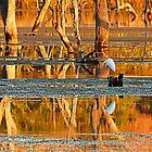 Reflections on Lake Kununurra by Julia Harwood