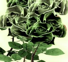 WILD IRISH ROSE 2.0 Sticker