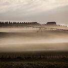Pivit Mist by Paul Campbell  Photography