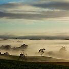 Myalla Mist by Paul Campbell  Photography