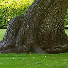 OLD TREE by JASPERIMAGE