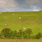 rural ireland scenic nature cows countryside landscape by upthebanner