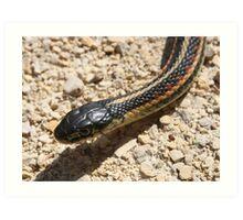 Head of a Red Sided Garter Snake Art Print