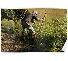 Ecuadorian Farmer Irrigating Crops Poster