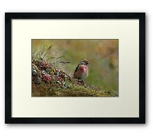 LINNET Male Framed Print
