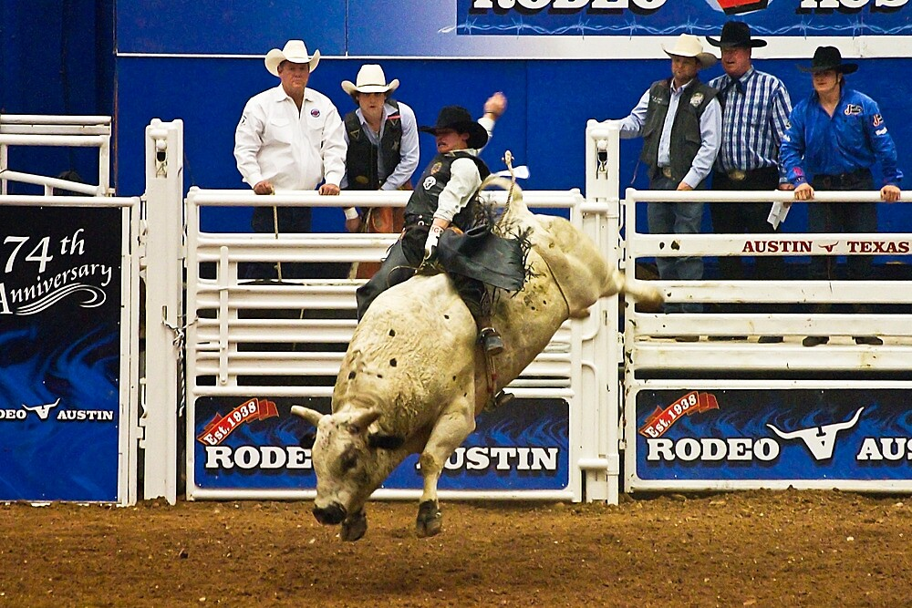 White Bulls Can Jump by Ray Chiarello