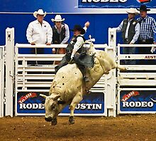 White Bulls Can Jump by Ray Chiarello