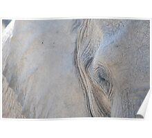 Elephant Portrait Poster