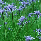 purple tassels by Naia