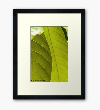 Light, Shadow, Green Framed Print