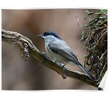 Willow tit - II Poster