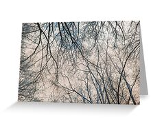 Branches Infrared Nature Greeting Card