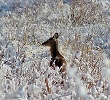 White-tail in the Snow by Kathleen Daley