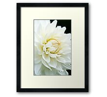 White Daliah Framed Print