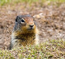Columbia Ground Squirrel by Michael Russell