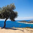 Olive Tree at Skala Marion by Paul Barnett