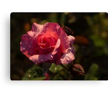 Inner Glow In Pink Canvas Print
