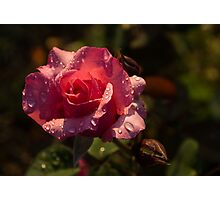 Inner Glow In Pink Photographic Print