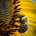 Bees and flowers 6 by Richard Fortier