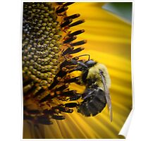 Bees and flowers 6 Poster