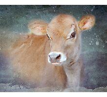 Little Jersey Calf Photographic Print