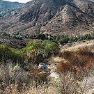 California Landscape by Heather Friedman