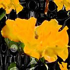 Yellow Flowers in Abstract by Terri Chandler